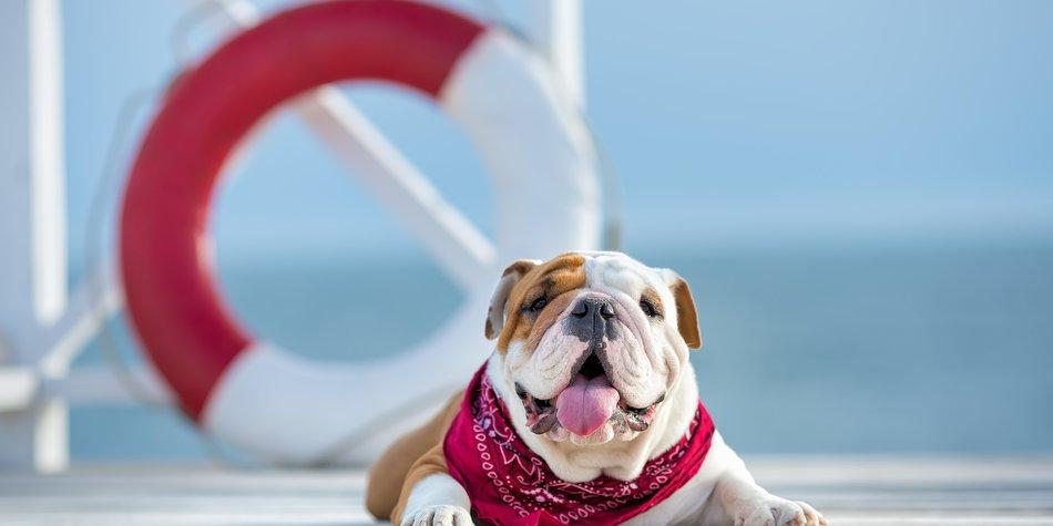 Bulldogge auf Balkon vergessen und gestorben
