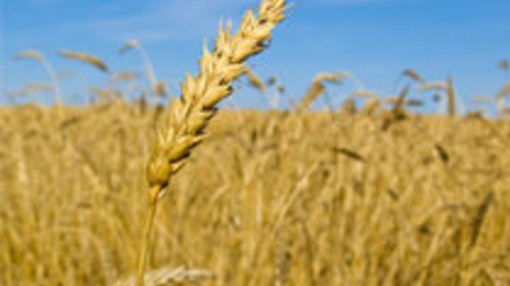 Glutenfreie Ernährung – Lebt man so gesünder?