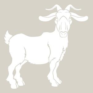 goat-klein