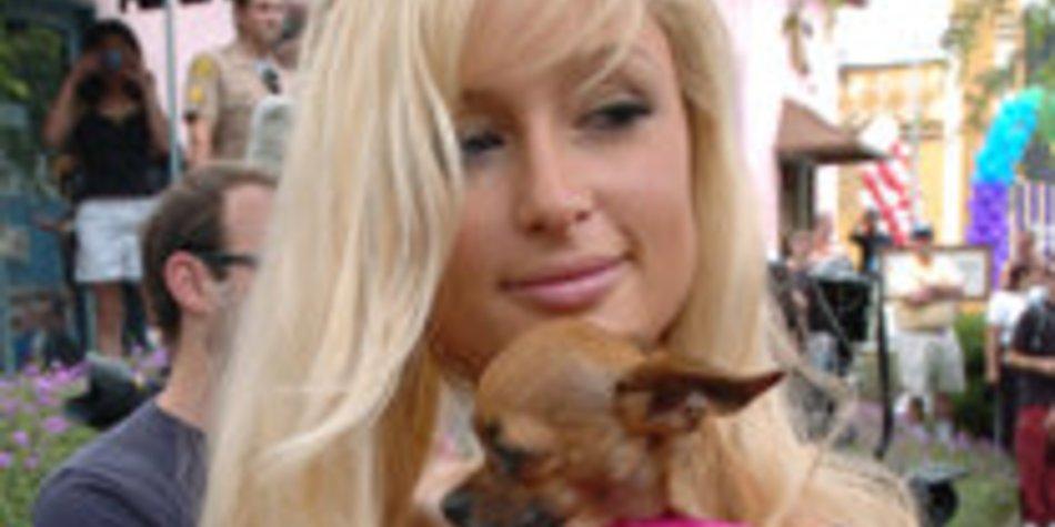 Paris Hilton verkleidet ihre Hunde