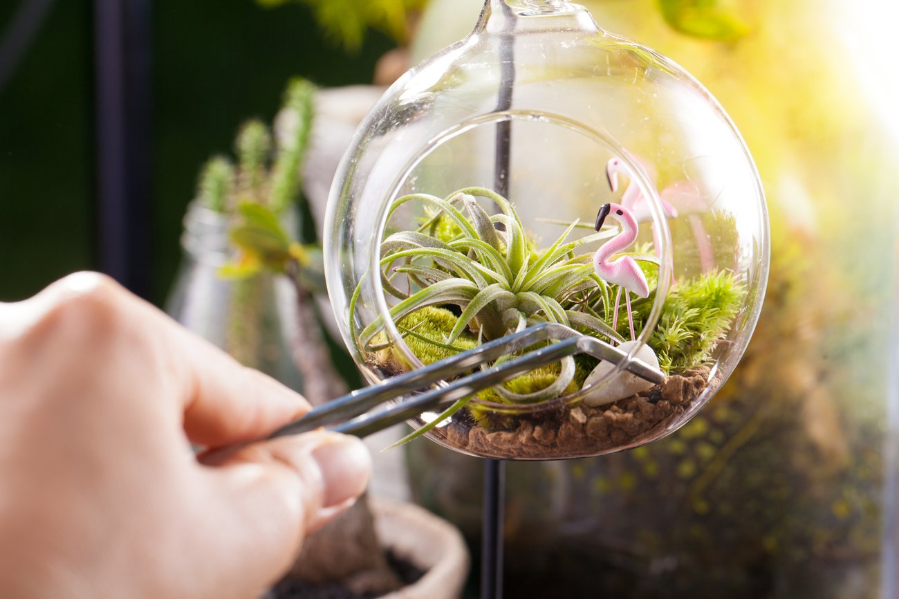 Pflanzenterrarium Deko