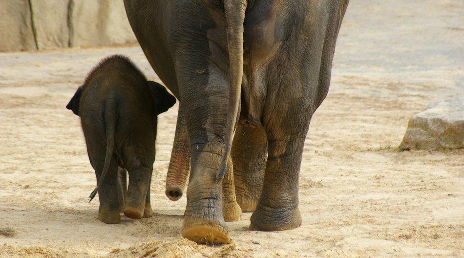 Kölner Zoo Darum wird das tote Elefantenbaby in der Tier-Pathologie untersucht