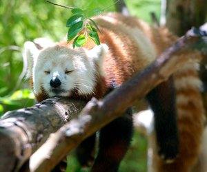 Schneller einschlafen