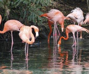 flamingo prints sind im trend