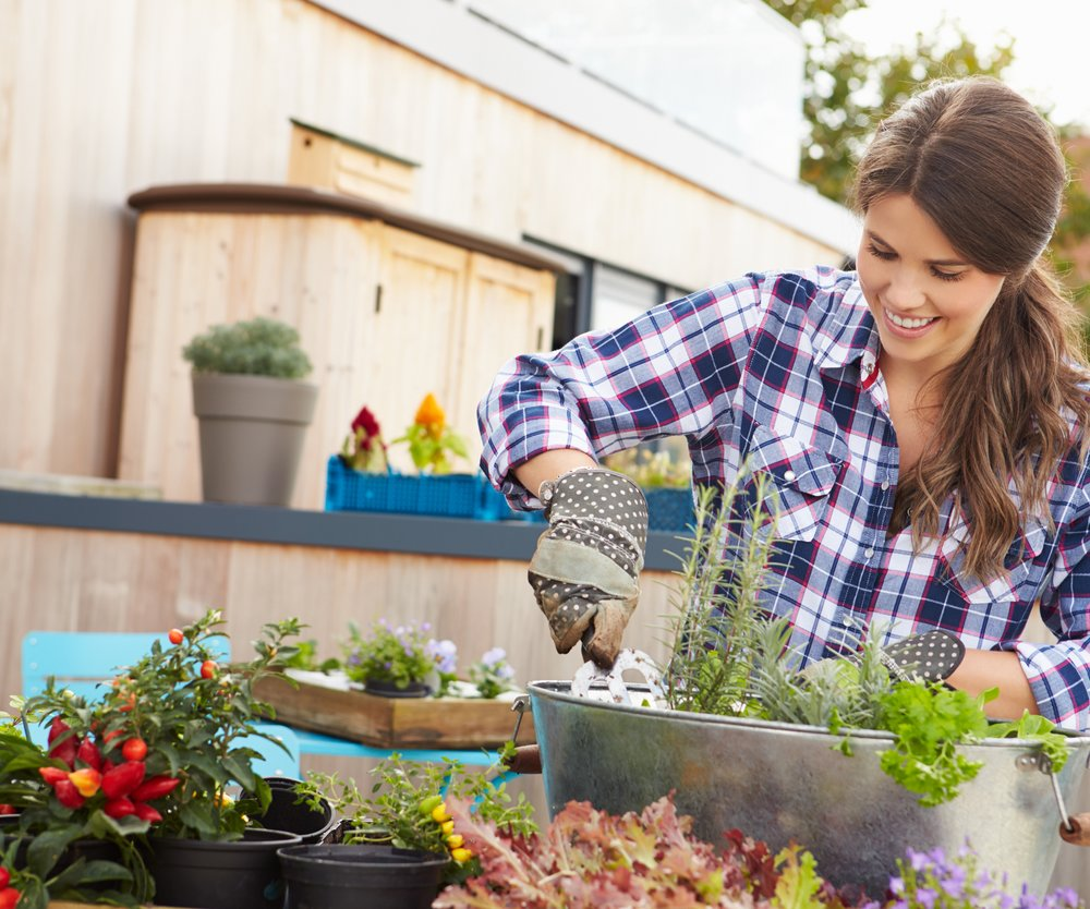 Woman Planting Container On Rooftop Garden. Wearing Gloves