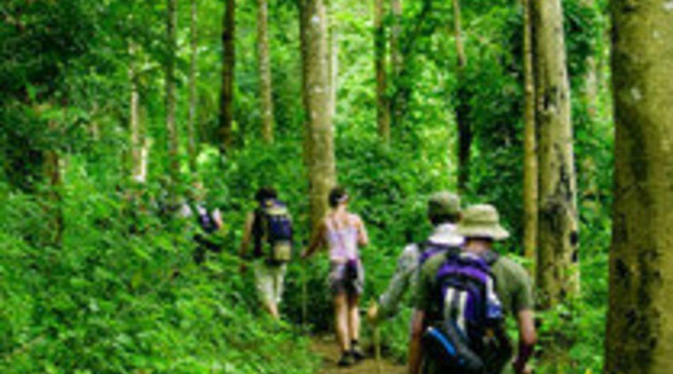 Dschungelcamp 2008