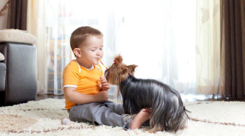 Haustiere gut für Babygesundheit