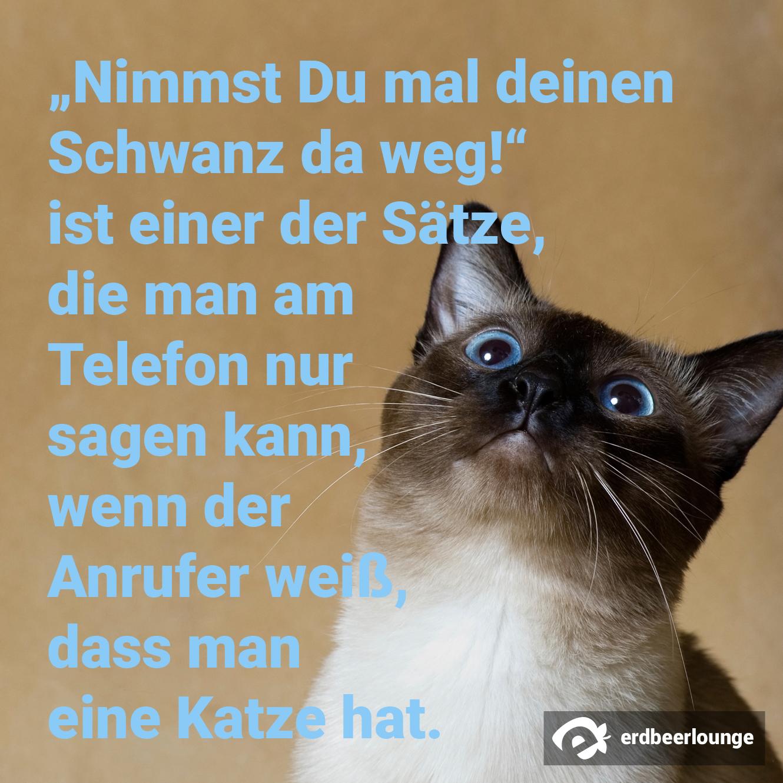 """""""Nimmst Du mal Deinen Schwanz da weg!"""" ist einer der Sätze, die man am Telefon nur sagen kann, wenn der Anrufer weiß, dass man eine Katze hat."""