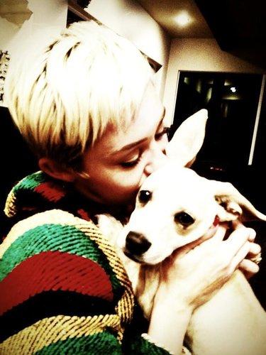 Miley Cyrus mit ihrem Hund