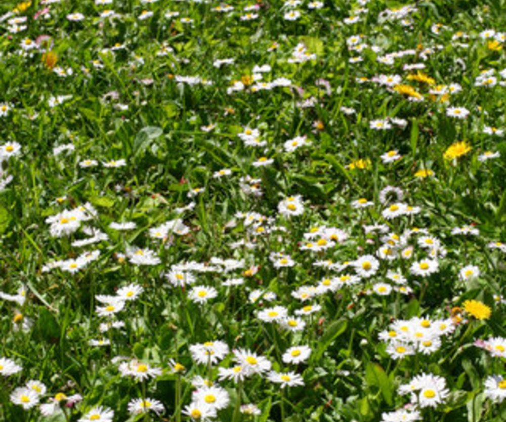 Frühling übers Jahr von J. W. von Goethe