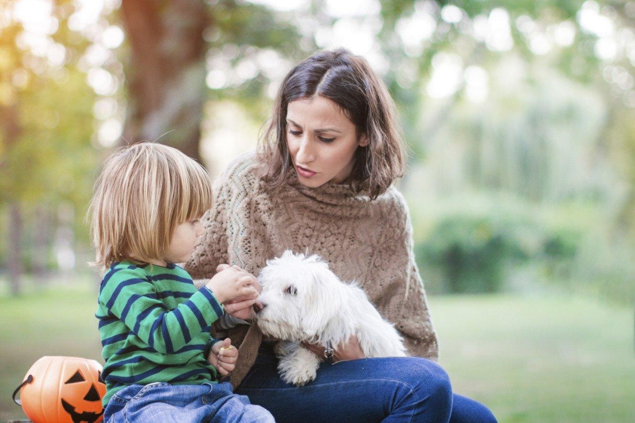 Haustiere für Kinder und Eltern