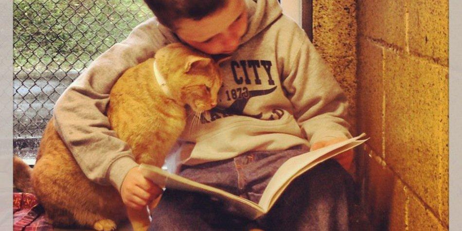 Wenn Kinder herrenlosen Katzen vorlesen