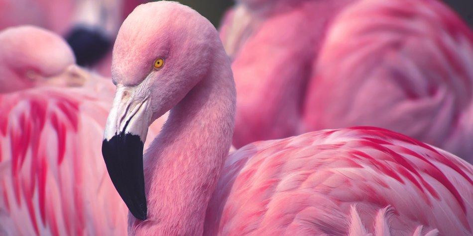 Flamingo-Tattoo