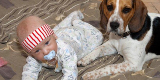 Haustiere können die Entwicklung fördern