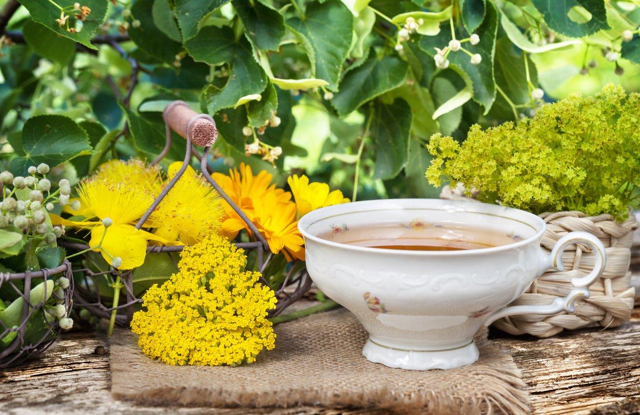 Tasse Frauenmanteltee und Heilpflanzen