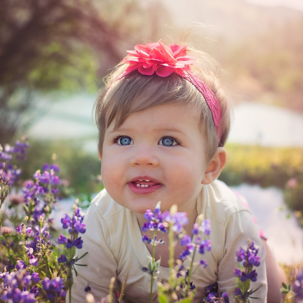 10 month old baby girl crawling through lupine flowers.