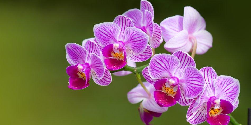 10 farbenpr chtige motive f r dein orchideen tattoo. Black Bedroom Furniture Sets. Home Design Ideas