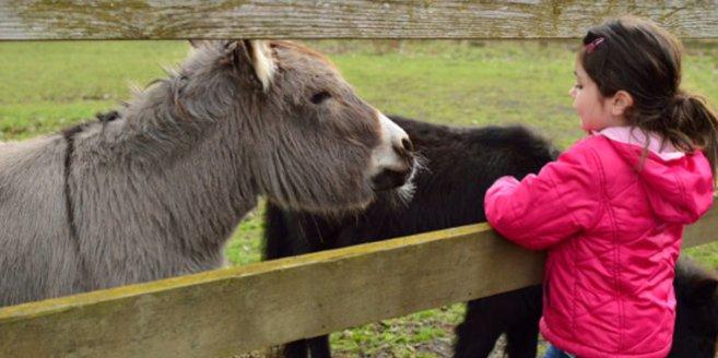Ausflüge mit Kindern: Kind streichelt Pony und Esel