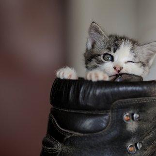 Missguided Schuhe Katzenfell