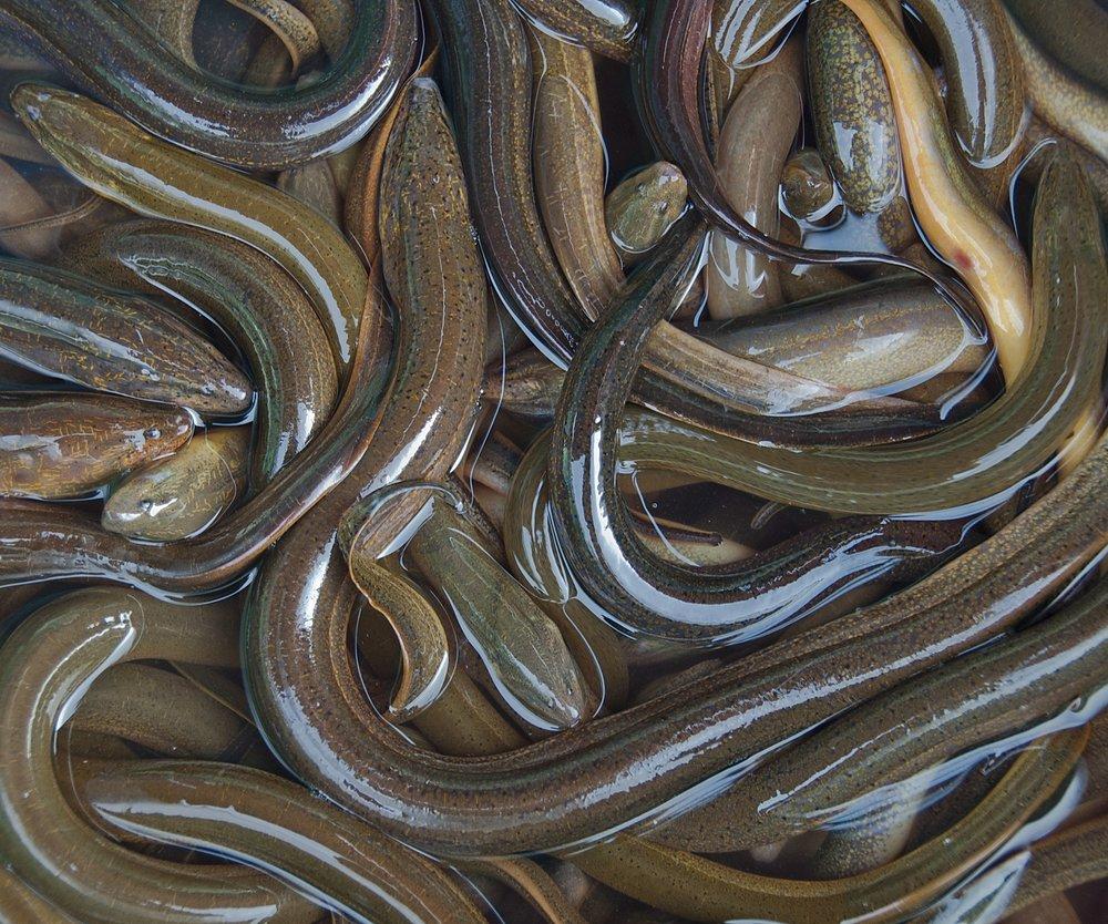 Was diese Bloggerin mit einem Aal anstellte, ist unglaublich