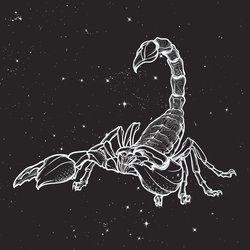 Skorpion-Tattoo