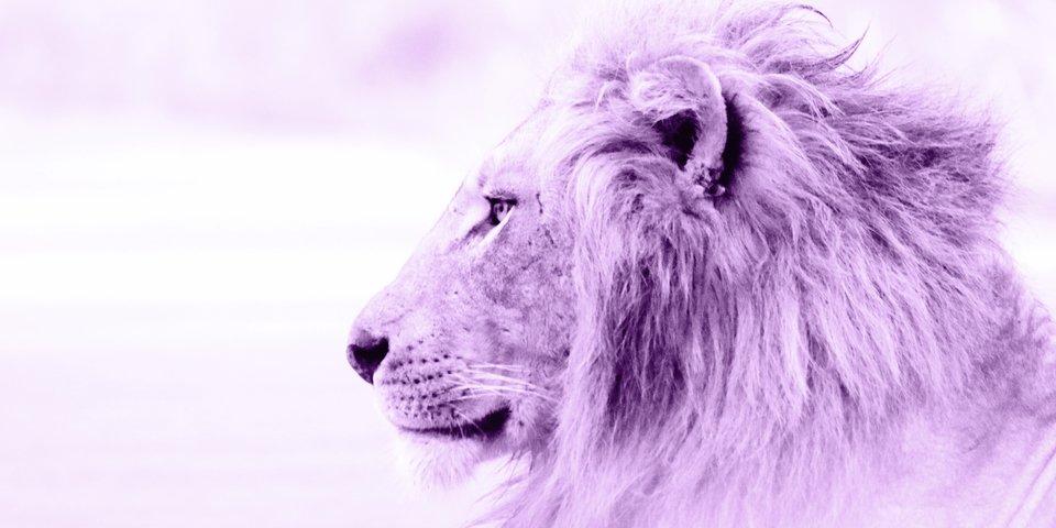 Löwe sexualität und zwilling Kombination Partnerschaft