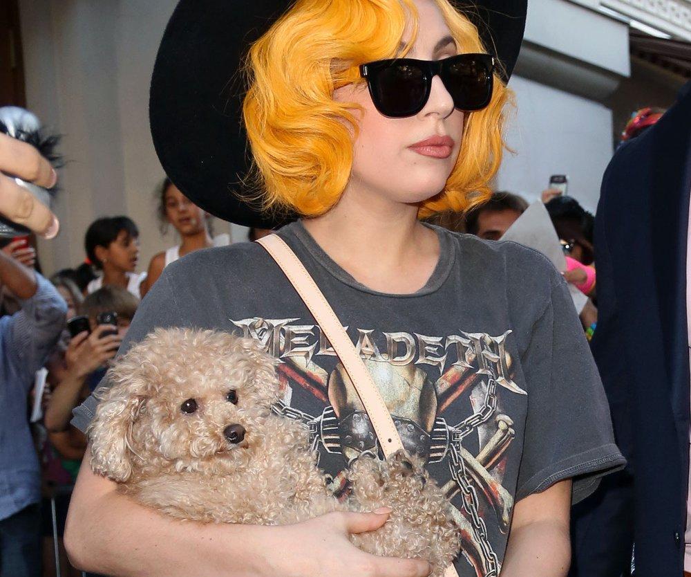Lady Gaga: Ihr Hund wird ein Künstler