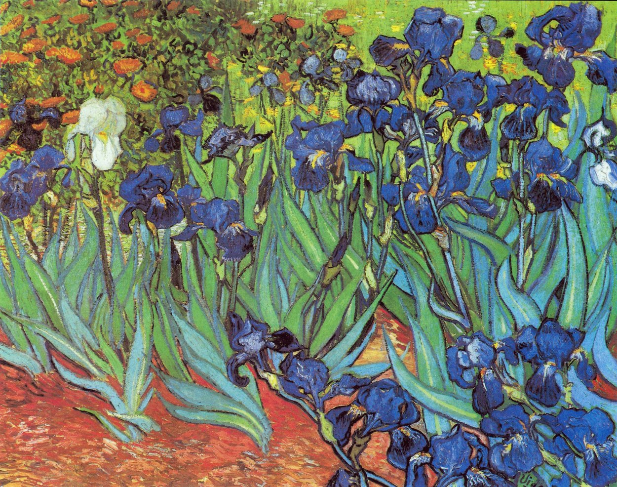 Vincent van Gogh Iris