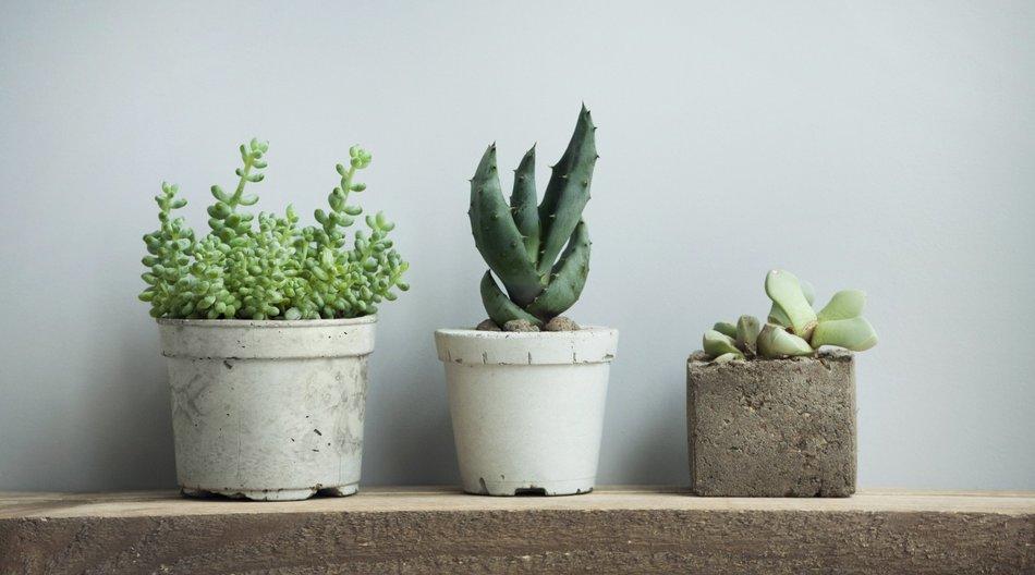 Beton Töpfe für Pflanzen