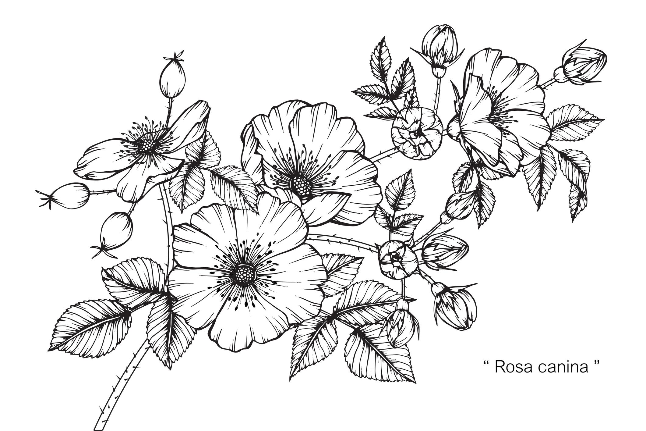 Design Portfolio Blumenranken Tattoo Vorlage