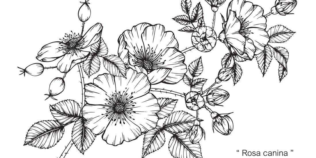 Blumen Tattoos 17 Aussergewohnliche Florale Vorlagen Bedeutung