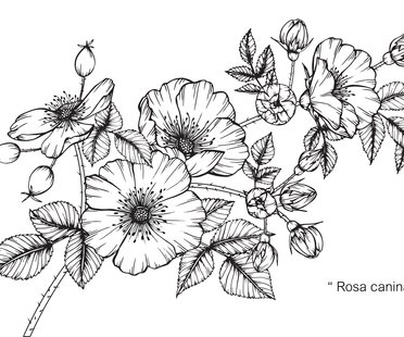10 Farbenprachtige Motive Fur Dein Orchideen Tattoo Desired De