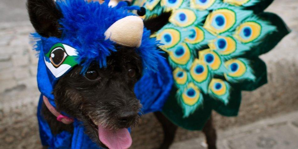 In Rio gibt es nicht nur Karneval für Menschen, sondern auch für Hunde!