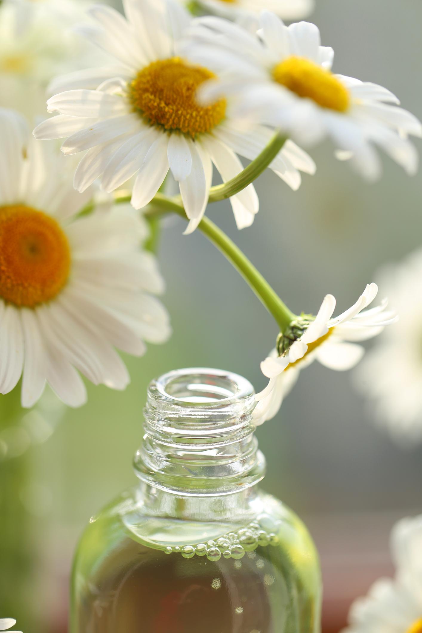 6 Wirksame Hausmittel Gegen Juckende Kopfhaut Desiredde
