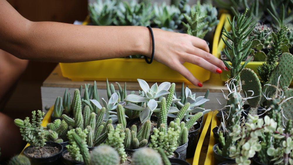 Kaktus-Nägel