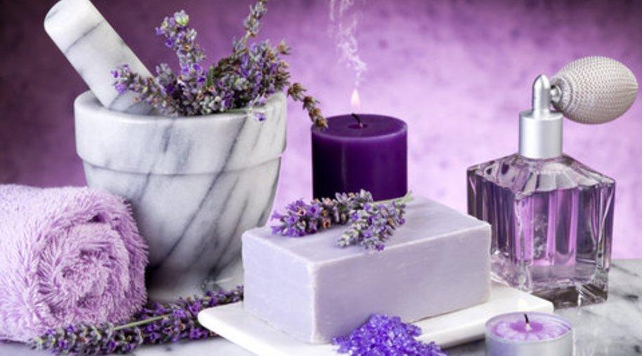 Lavendel – eine richtig dufte Pflanze