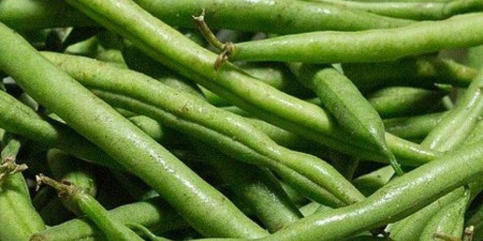 Meine grünen Bohnen!