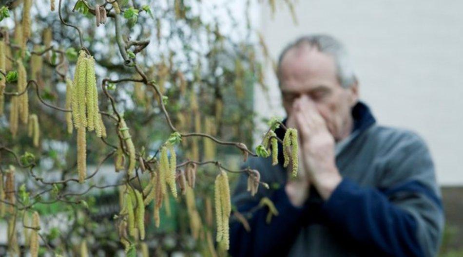 Blütenpollen, etwa von der Hasel oder Erle, machen Allergikern zu schaffen.