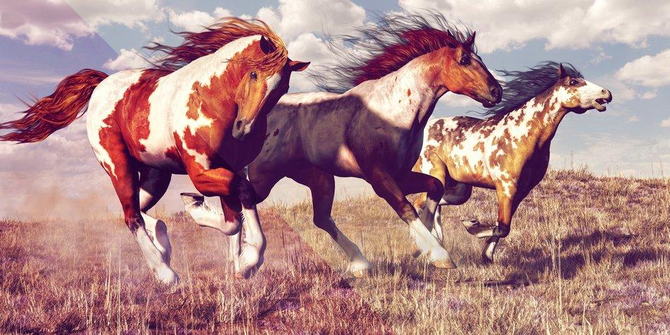 Ausmalbilder Pferde Und Ponys Stute Fohlen Und Esel 5