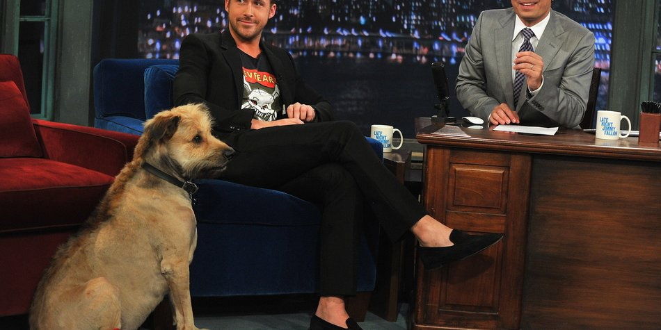 Ryan Gosling überrascht mit Dogge