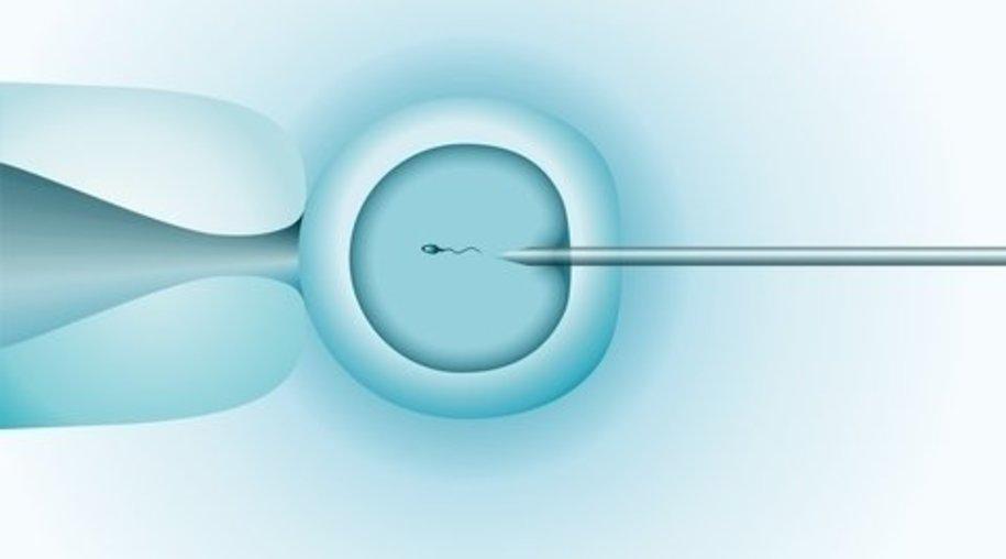 Eizellen junger Frauen geeigneter zum Einfrieren