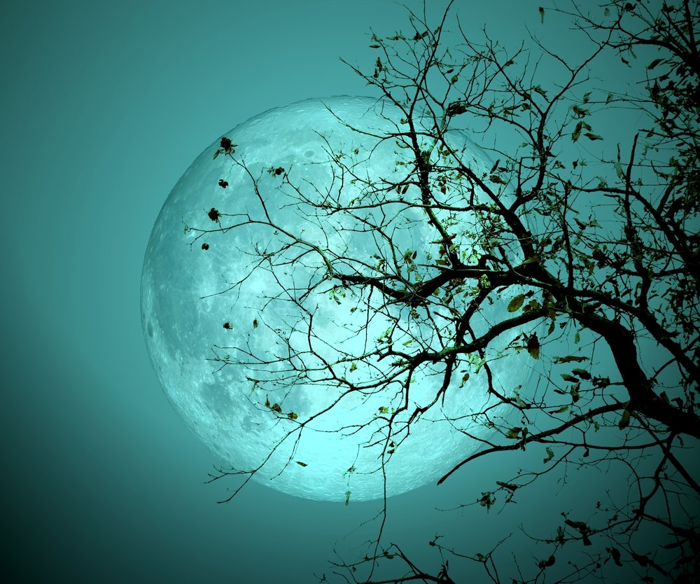Bare tree on full moon at night. Elements of this image furnished by NASA: