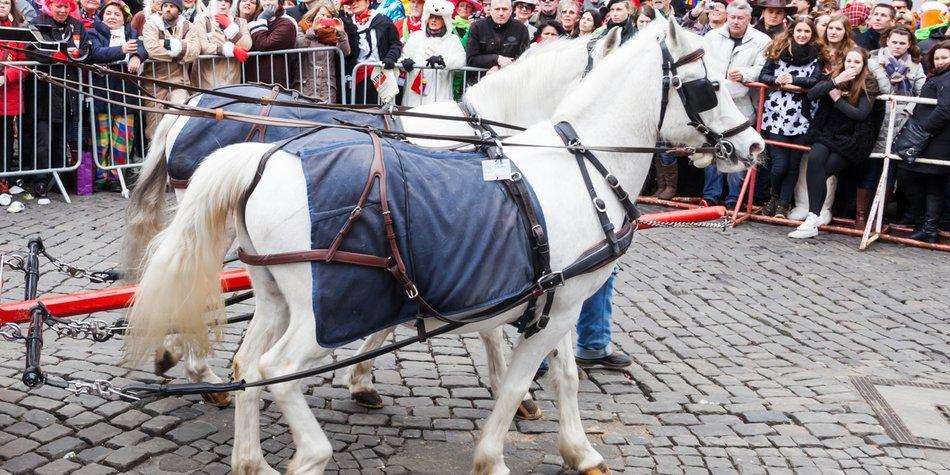 Köln Karneval Pferd Symbolbild