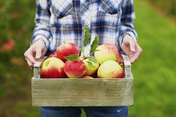 Äpfel sind natürliche Appetitzügler