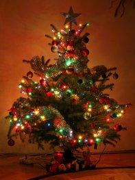 Geschmückte Weihnachtsbäume zum Fest.