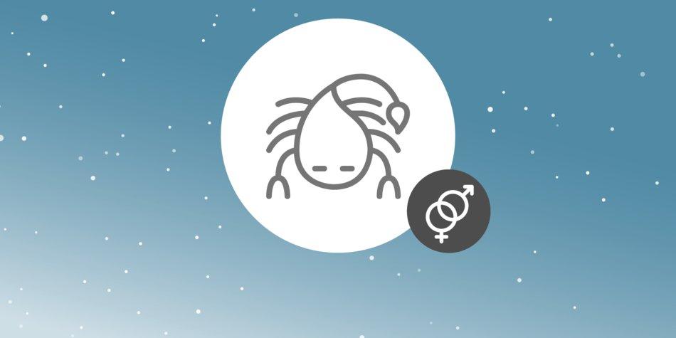 08-Skorpion