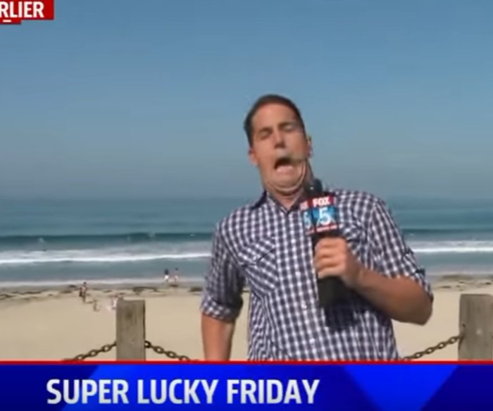 Big bug gives FOX 5 reporter a big scare Are we live YouTube