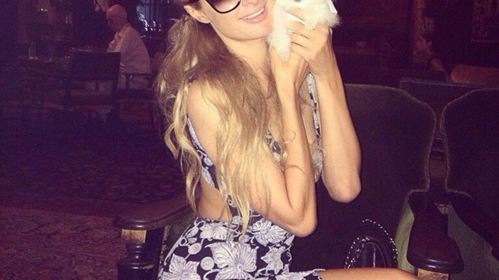Paris Hilton: Tierischer Familienzuwachs für 13.000 Dollar