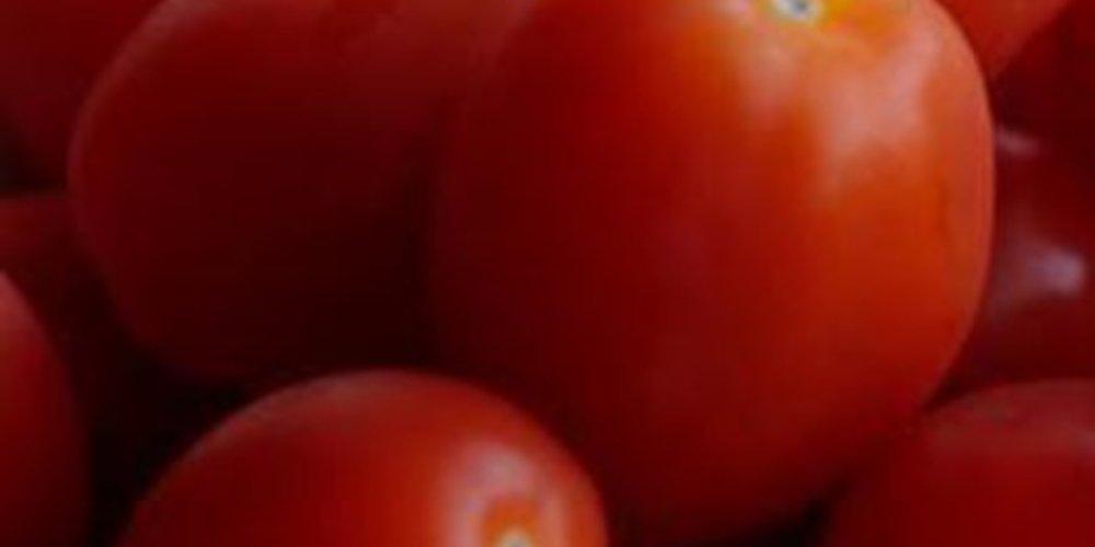 Tomaten-Ernte-Chutney