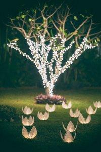 Hochzeitsbaum pflanzen